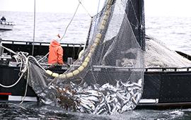 La Pesca Eficiente