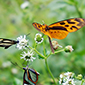 Consejo de Ministros aprobó nueva Estrategia Nacional de Biodiversidad