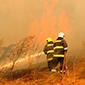361.512 hectáreas afectadas totalizan los incendios activos