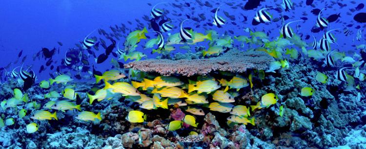 Chile se convertirá en líder mundial de conservación marina
