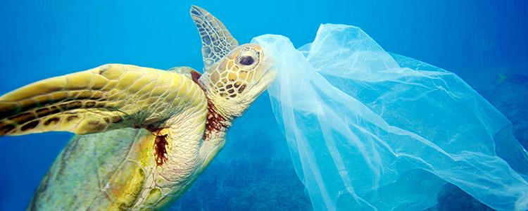 """Mena: """"Prohibición de bolsas plásticas es fundamental para proteger océanos"""""""