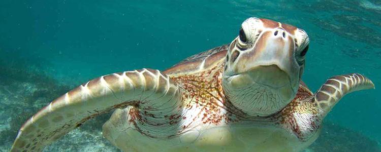 Partió IMPAC4, congreso internacional de áreas marinas protegidas