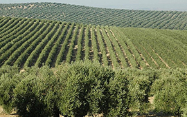 Presentan anteproyecto de la Estrategia de Sustentabilidad Agroalimentaria