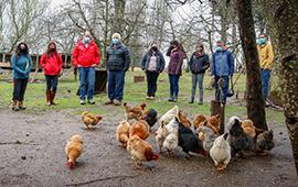Comunidad originaria desarrolla innovador proyecto para incubación de huevos mediante ERNC