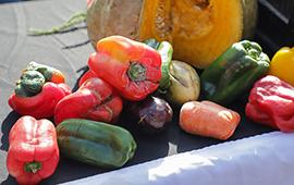 Recuperarán alimentos de segunda selección en ferias libres para fines de beneficencia