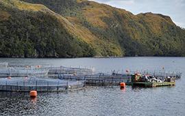 Proyecto que exige remover sedimentos en fondos marinos se definirá en comisión mixta