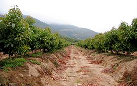 Informe IPCC sobre tierras: Piden más regulación agrícola en Chile