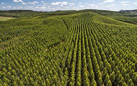 Destacan rol de los bosques para una reactivación sostenible