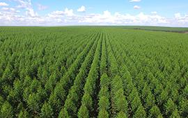 Científicos concluyen que plantaciones pueden ayudar a contener la erosión del suelo