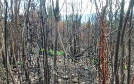 Chile pierde 25.000 ha de bosque nativo cada año según informe de la U. de Chile