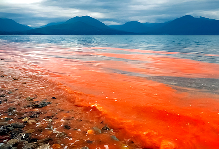 Implementarán primer laboratorio de toxinas marinas en el Biobío