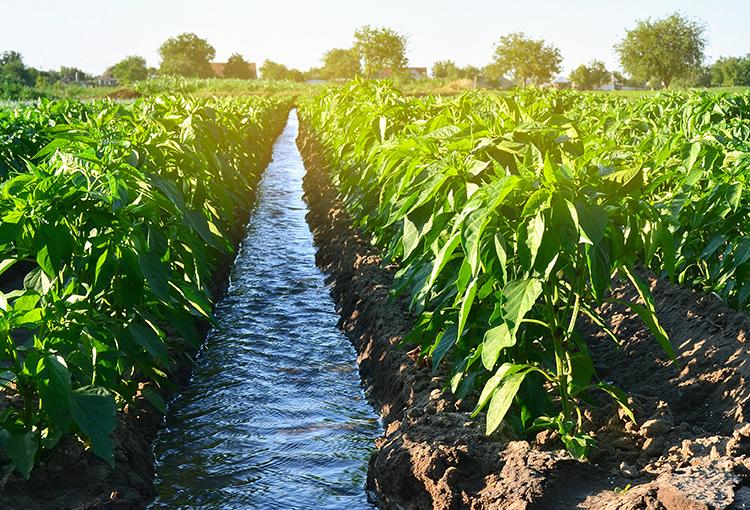 Reforma al Código de Aguas: comisión mixta zanjará diferencias entre la Cámara y el Senado