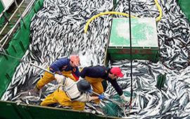 La Pesca Segura
