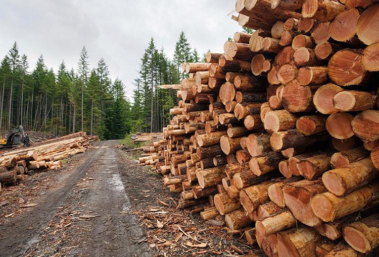 Aprobado en general texto que establece ingreso de proyectos de explotación forestal al SEIA