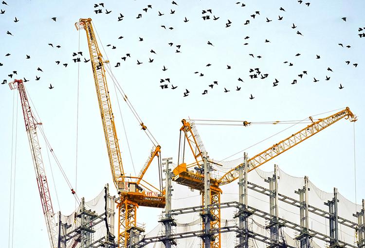 Pto. Montt: ordenan paralizar obras inmobiliarias sobre humedales Alto La Paloma y la Wuiña