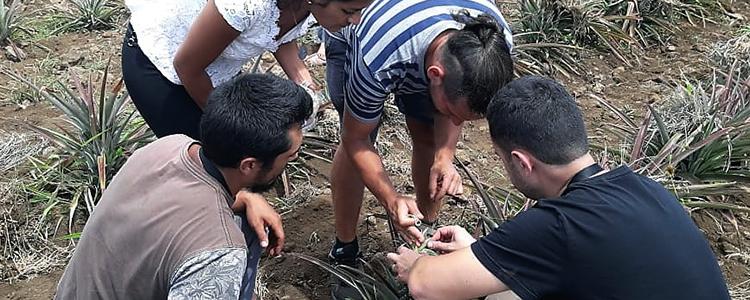 Promueven agricultura más limpia en Rapa Nui mediante uso de controladores biológicos