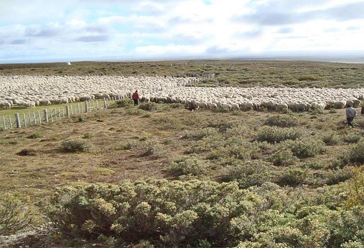Zonificación en Magallanes evalúa productividad agrícola por cambio climático