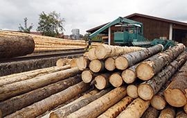 Con Acuerdo de Producción Limpia, pymes madereras del Maule buscan cumplir PDA