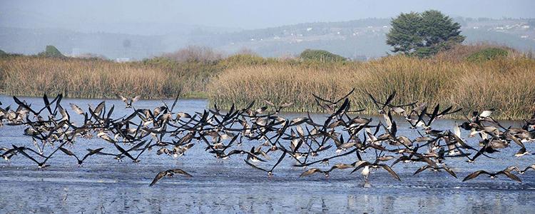 Humedal del río Maipo se suma al Plan Nacional de Protección