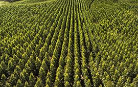 Consejo de Política Forestal trabaja para definir protocolo de plantaciones 2.0