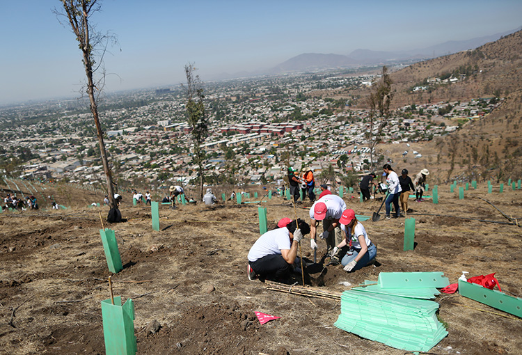 Histórica reforestación en Cerros de Renca fortalece la acción climática