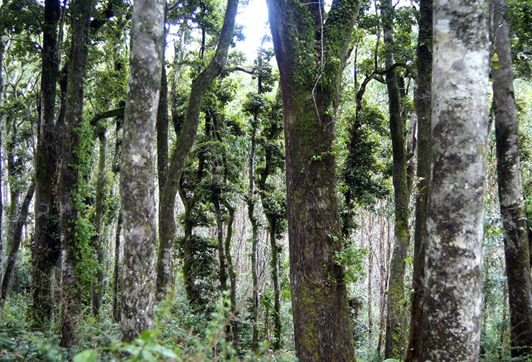 Claros en el Bosque