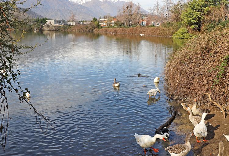 Aprueban reglamento de la Ley que refuerza la protección de humedales urbanos