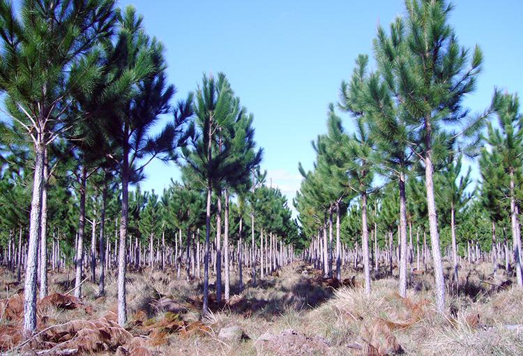 Sector empresarial plantea acciones para afrontar el cambio climático