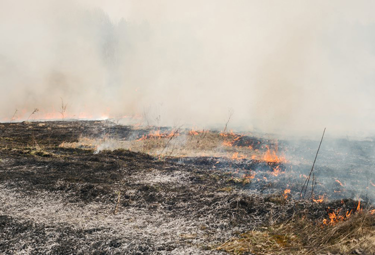 Lanzan manual de evaluación y restauración de suelos afectados por incendios
