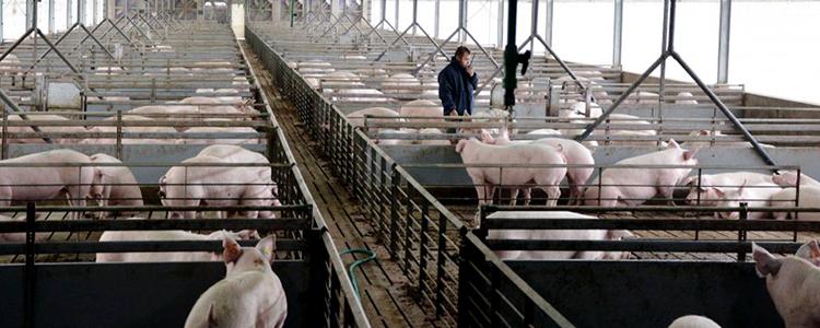 Avanza proyecto de ley que califica al olor como agente contaminante