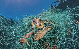 A Pescar las Redes